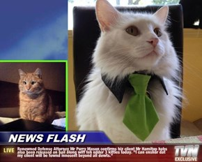 "NEWS FLASH - Renowned Defense Attorney Mr Purry Mason confirms hiz client Mr Hamitup habs also been released on bail along wiff teh udder 3 kitties today. ""I can enshur dat my client will be fownd innosent beyond all dowts."""