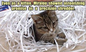 Even  as  a  kitten,  Miralou  showed  astonishing  promise   as   a   precision  shredder.
