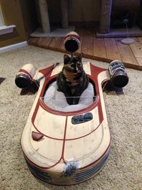 Homemade Kitty Landspeeder