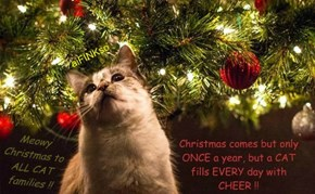 Christmas comes but only ONCE a year, but a CAT fills EVERY day with CHEER !!