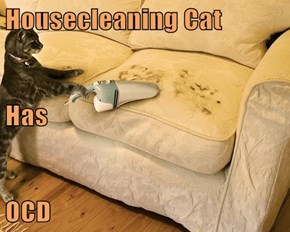 Housecleaning Cat Has OCD
