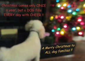 Christmas comes only ONCE a year, but a DOG fills EVERY day with CHEER !!