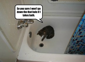 The Real Reason Cats Hate Baths
