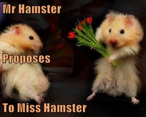 Mr Hamster Proposes To Miss Hamster