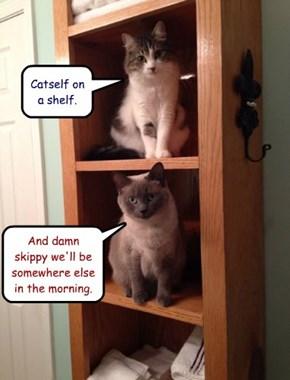 Catself on a shelf.