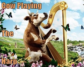 Cow Playing The Harp
