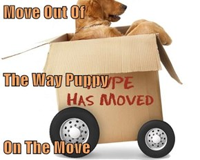 Move Out Of The Way Puppy On The Move