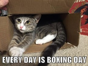 EVERY DAY IS BOXING DAY