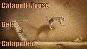 Catapult Mouse Gets Catapulted