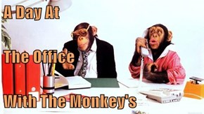 A Day At The Office With The Monkey's