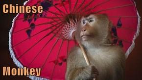 Chinese  Monkey