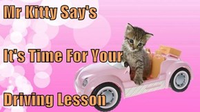 Mr Kitty Say's It's Time For Your Driving Lesson