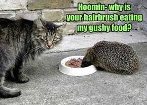 Hoomin- why is  your hairbrush eating my gushy food?