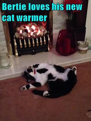 Bertie loves his new cat warmer