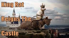 King Rat Reigns The Castle