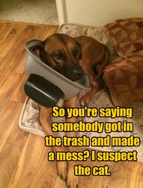 So you're saying somebody got in the trash and made a mess? I suspect the cat.