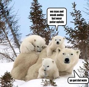 we mae awl wook awike but weer polar opisitz