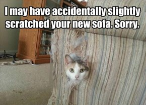 I may have accidentally slightly scratched your new sofa. Sorry.