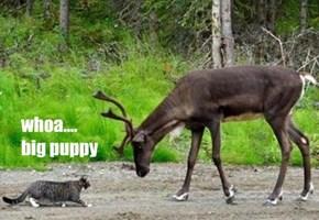 whoa....  big puppy