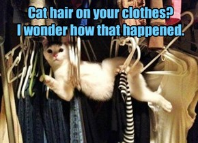 Cat hair on your clothes? I wonder how that happened.