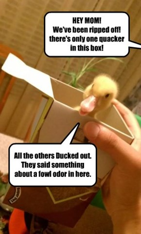 HEY MOM! We've been ripped off! there's only one quacker in this box!