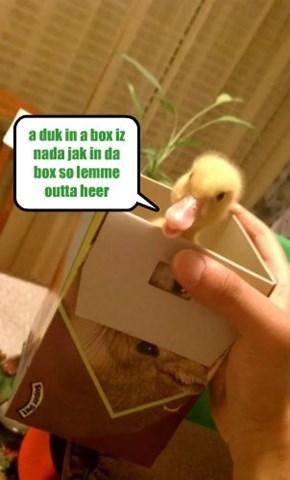 a duk in a box iz nada jak in da box so lemme outta heer