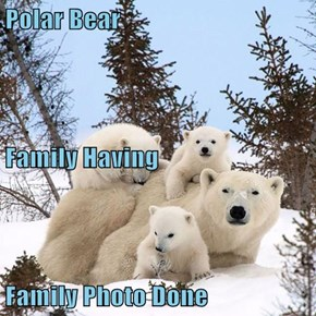 Polar Bear  Family Having Family Photo Done