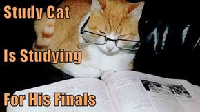 Study Cat Is Studying For His Finals