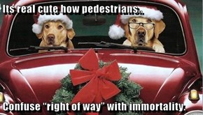 """Its real cute how pedestrians..  Confuse """"right of way"""" with immortality."""