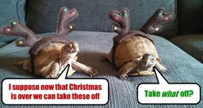 Turtle Problems