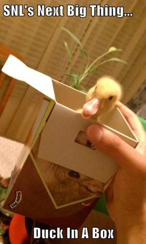 SNL's Next Big Thing...  Duck In A Box
