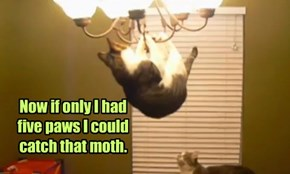 Now if only I had  five paws I could  catch that moth.