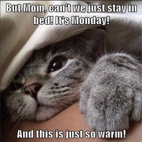 But Mom, can't we just stay in bed! It's Monday!  And this is just so warm!