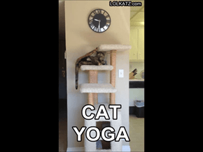 Try out this new kitten yoga position