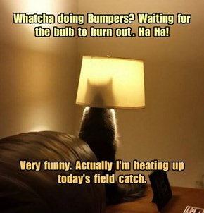 Whatcha  doing  Bumpers?  Waiting  for  the  bulb  to  burn  out .  Ha  Ha!