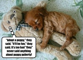 """""""Adopt a puppy,"""" they said. """"It'll be fun,"""" they said. It's too bad """"they"""" never said anything about puppy puberty!"""