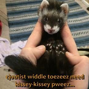 cjuutist widdle toezeez need          kissey-kissey pweez...