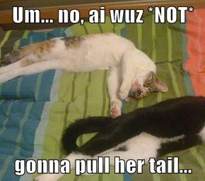 Um... no, ai wuz *NOT*  gonna pull her tail...