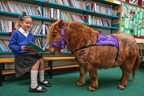 Tiny Working Therapy Ponies? YES PLEASE