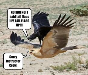 Flying Lessons for the Modern Bird