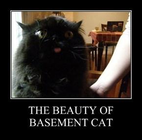 THE BEAUTY OF BASEMENT CAT