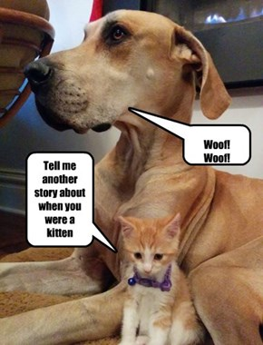 Dog tells kitteh stories about when he was a cat?