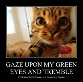 GAZE UPON MY GREEN EYES AND TREMBLE