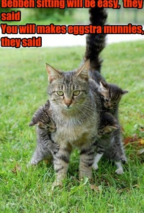 College Kitteh did not bargain for kittens from hell