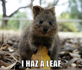 I HAZ A LEAF