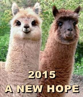 2015                             A NEW HOPE
