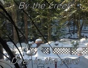 By the creek  Deer in the yard