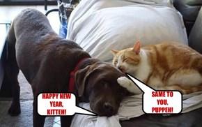 HAPPY NEW YEAR, KITTEH!