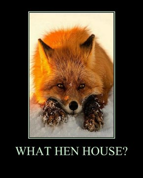 WHAT HEN HOUSE?