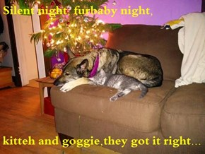 Silent night, furbaby night,  kitteh and goggie,they got it right...